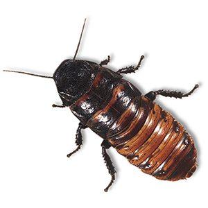 Hobbi rovarok